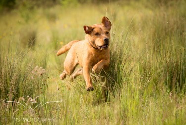 Dog_photographer_Derbyshire-29