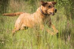 Dog_photographer_Derbyshire-30