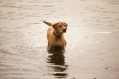 Dog_photographer_Derbyshire-32