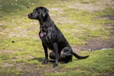 Dog_Photographer_Derbyshire-34