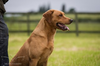 Dog_equine_Photographer_Derbyshire (28 of 74)