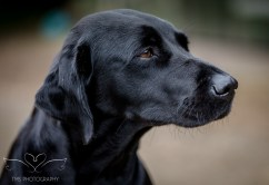 Dog_equine_Photographer_Derbyshire (51 of 74)