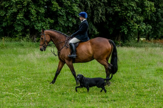 Dog_equine_Photographer_Derbyshire (62 of 74)