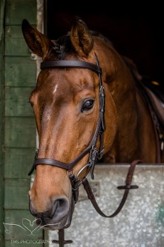 Equine_horse_Photographer_Derbyshire (1 of 1)