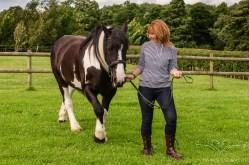 equine_photographer_derbyshire-7