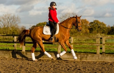 equine_photographyer_derbyshire_-20