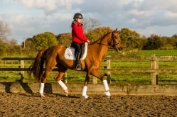 equine_photographyer_derbyshire_-25