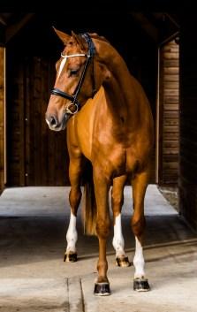 equine_photographyer_derbyshire_-8