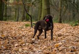 Dog_Photographer_Shropshire-16