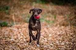 Dog_Photographer_Shropshire-31