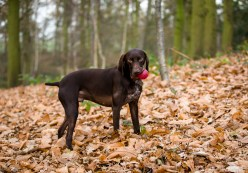 Dog_Photographer_Shropshire-33