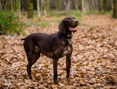 Dog_Photographer_Shropshire-43