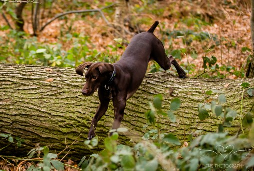 Dog_Photographer_Shropshire-68