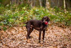 Dog_Photographer_Shropshire-69