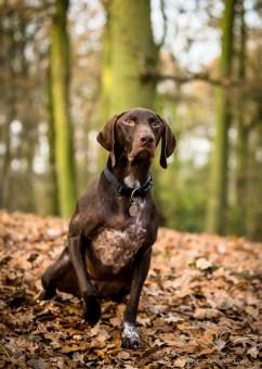 Dog_Photographer_Shropshire-7