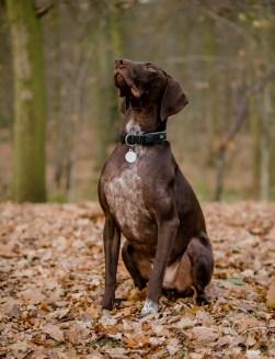 Dog_Photographer_Shropshire-9