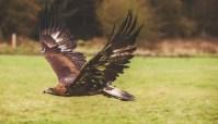 Birdsofprey_photography (1 of 1)-2