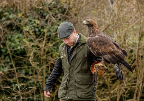 Birdsofprey_photography (1 of 71)