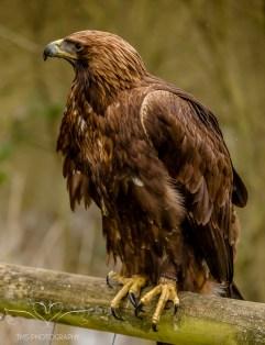 Birdsofprey_photography (14 of 71)