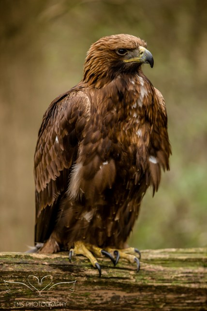 Birdsofprey_photography (36 of 71)