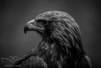 Birdsofprey_photography (38 of 71)