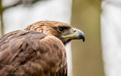 Birdsofprey_photography (42 of 71)