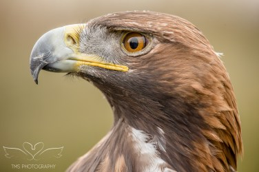 Birdsofprey_photography (52 of 71)
