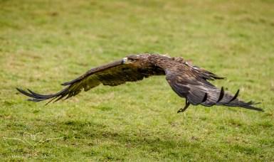 Birdsofprey_photography (57 of 71)