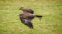 Birdsofprey_photography (60 of 71)