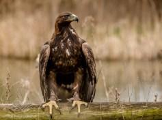 Birdsofprey_photography (9 of 71)