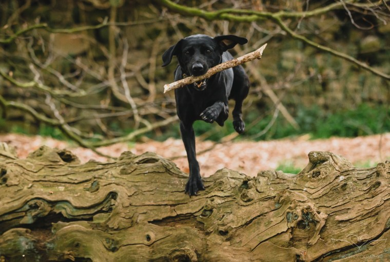 Dog_photographer_Derbyshire-32
