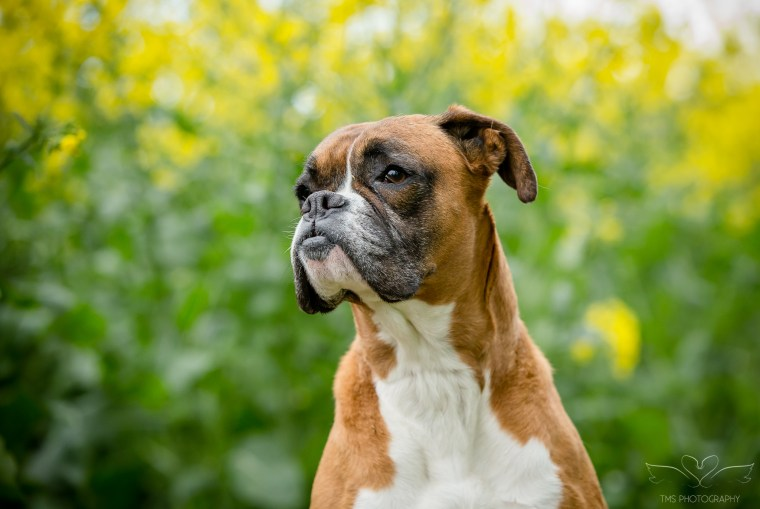 dog_photographer_Derbyshire-42
