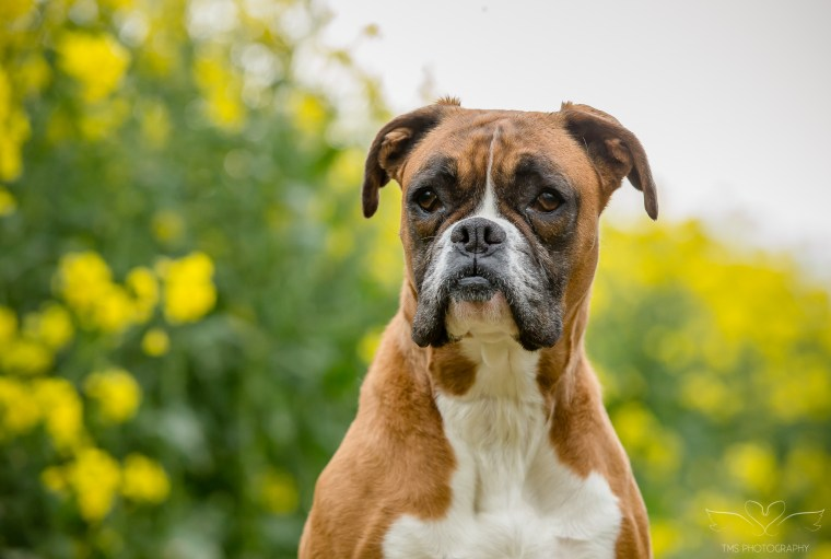 dog_photographer_Derbyshire-48