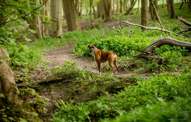 dog_photographer_Derbyshire-7