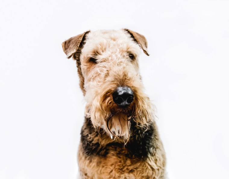 dog_photographer_Leicestershire-69