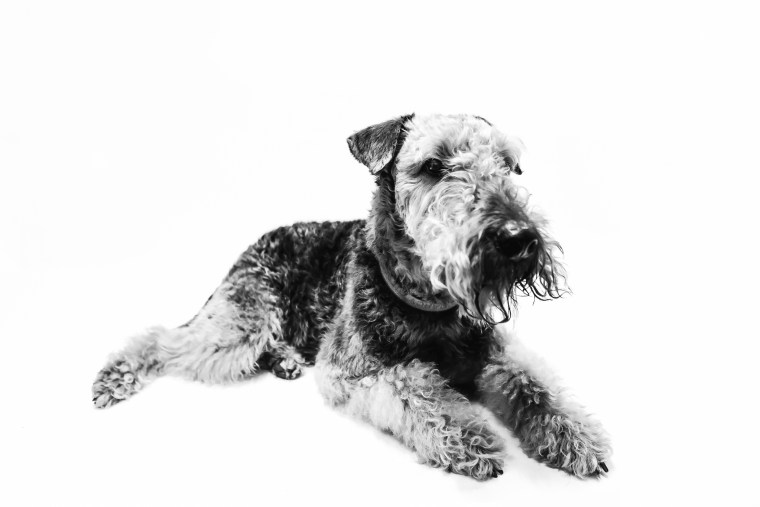 dog_photographer_Leicestershire-80