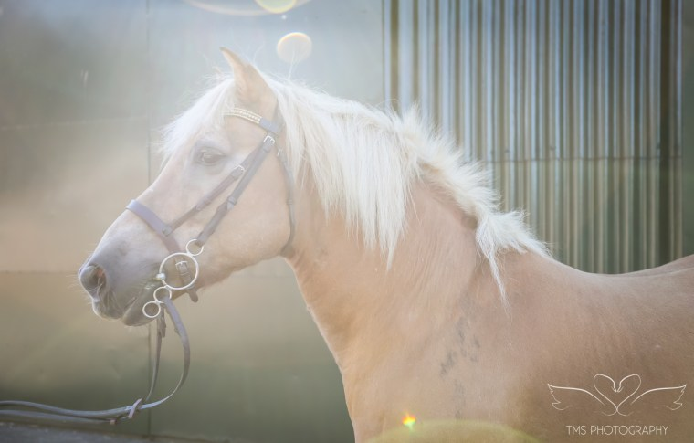 equine_photographer_derbyshire-37
