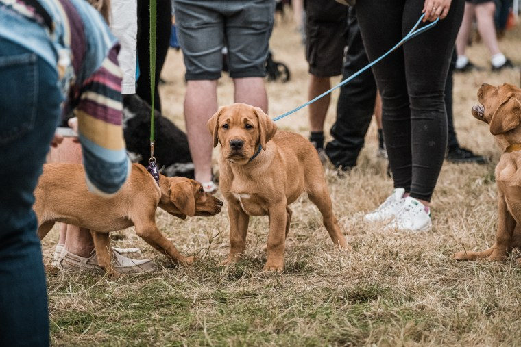 Dog-Fest-Bristol-2019 (33 of 130)