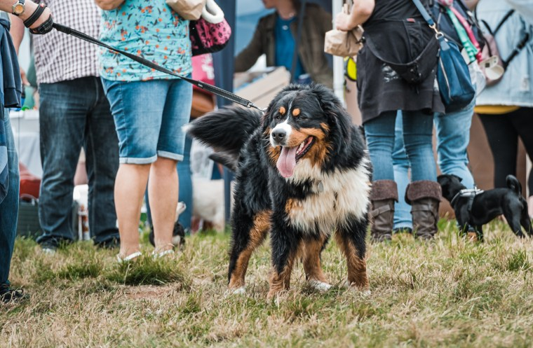 Dog-Fest-Bristol-2019 (64 of 130)