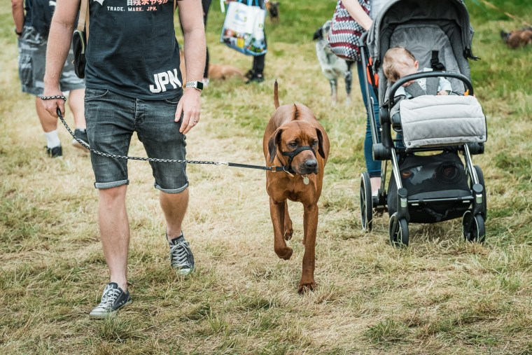 Dog-Fest-Bristol-2019 (97 of 130)