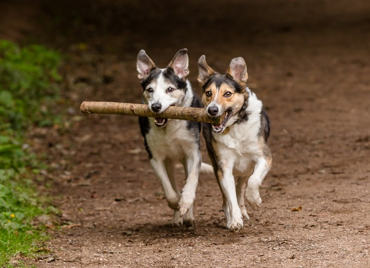dog_photographer_Derbyshire-14