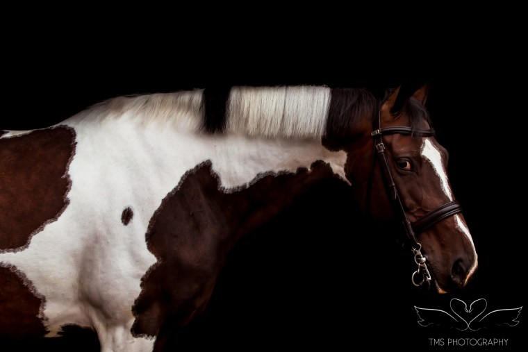 equine_photographer_derbyshire-52