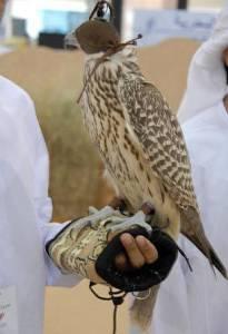 falcon of Abu DHabi