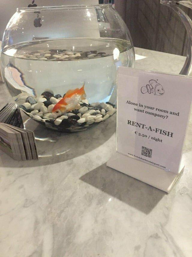 Этот европейский отель предлагает напрокат рыбку для тех путешественников, кто чувствует себя одиноко