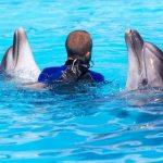 Do Dolphins Get Alzheimer's?