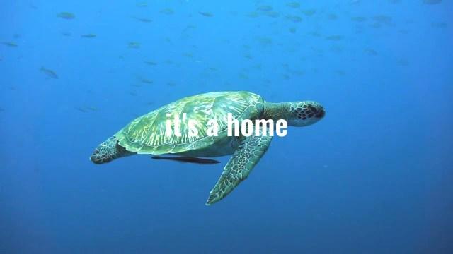 Marine Mammal