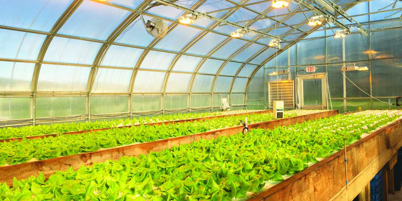 New aquaponics center opens in Madbury
