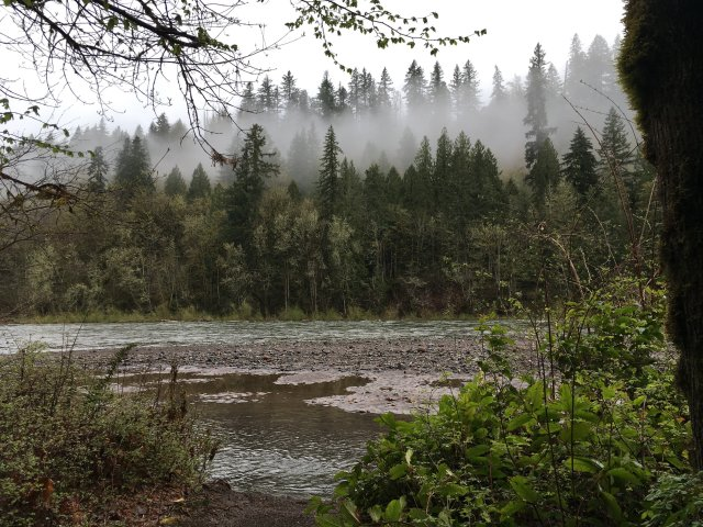 A view of the Sandy River from Oxbow Regional Park. There is mist in the conifers across the river.