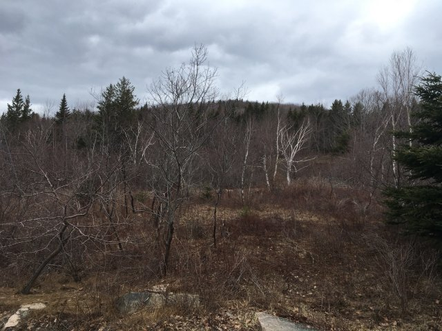 A view of are trees on a hillside in Maine.
