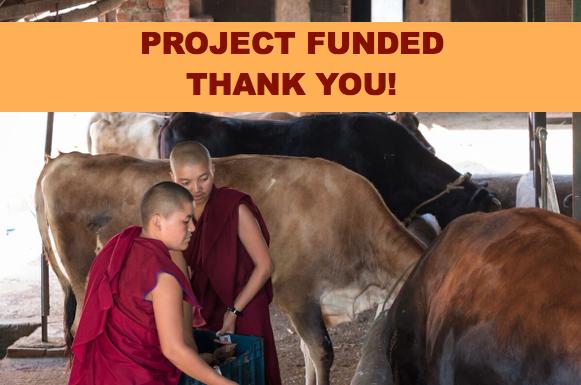 cows, cow barn floor, Dolma Ling Nunnery, Tibetan nuns and cows